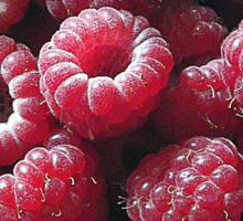 Raspberries close up Sticker