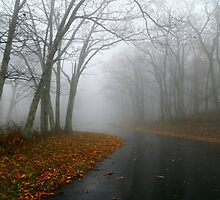 Blue Ridge (in the Fog) - I      ^ by ctheworld