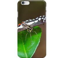 Spotted Butterfly  iPhone Case/Skin