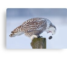 Cough it up buddy - Snowy Owl Metal Print