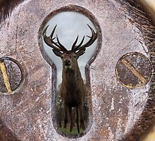 stag through a keyhole by daveashwin