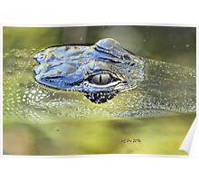 Gator Eye (Alligator mississippiensis) Poster
