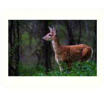 Portrait of a Fawn - White Tailed Deer Art Print