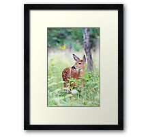 Once upon a Fawn - White Tailed Deer Fawn Framed Print