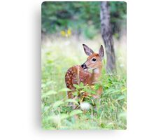 Once upon a Fawn - White Tailed Deer Fawn Canvas Print