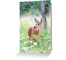 Once upon a Fawn - White Tailed Deer Fawn Greeting Card