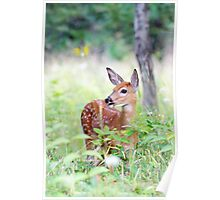 Once upon a Fawn - White Tailed Deer Fawn Poster