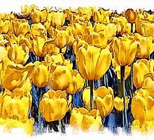 Yellow Tulips - watercolour by PhotosByHealy