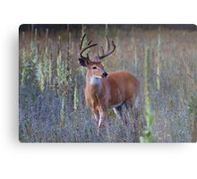Early Morning White tailed Buck Metal Print