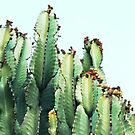 Cactus Love #redbubble #decor  by Uma Gokhale