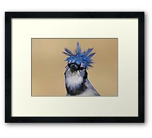 Is that you Don King? - Blue Jay Framed Print