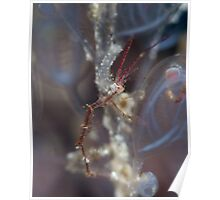 Late for Halloween - Skeleton Shrimp Poster