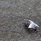Gull on Breaking Ice by Jo Nijenhuis