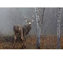 Buck - White-tailed Buck Photographic Print