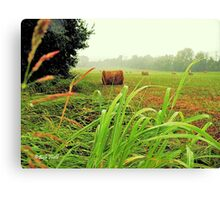 """""""Tall Grass and Hay Bales""""... prints and products Canvas Print"""