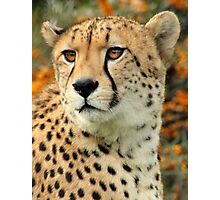 Ramses - Cheetah Photographic Print