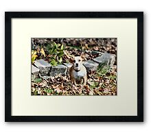 I'm tough! Hey! Stop laughing!  Framed Print