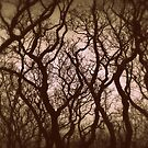 """"""" Gnarled Wood """" by Richard Couchman"""