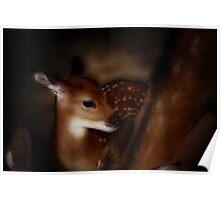 bambi, graphic shirt Poster