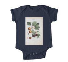 Traité des Arbres et Arbustes 0025 Armeniaca atro purpurea Abricotiier noir Apricots with leaves One Piece - Short Sleeve