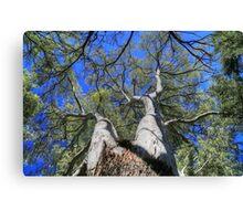 Tree Crown Canvas Print
