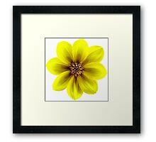 Yellow Daisy, a happy chappie. Framed Print