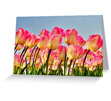 Pink Tulips Bow For The Sun Greeting Card