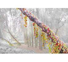Enigma Trees 2 Photographic Print