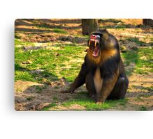 A Boring Day - Mandrill Canvas Print