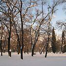Winter sunshine by Maria1606