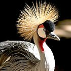 Royal Crowned Crane by Photography by TJ Baccari