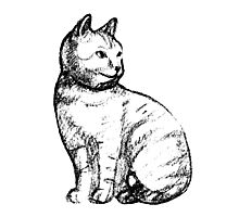 Cat hand drawn effect Photographic Print