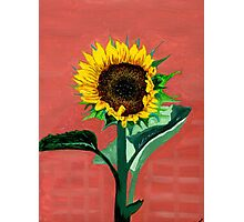 Homegrown Sunshine-My Sunflower Photographic Print