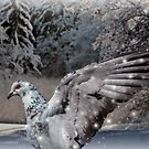 Snow Pigeon by Jane-in-Colour