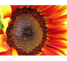 Sunflower from the Color Fashion Mix Photographic Print