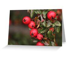 More Berries  Greeting Card