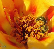 Portulaca in Orange Fading to Yellow by JMcCombie