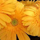 Sunshine by Sandra Fortier