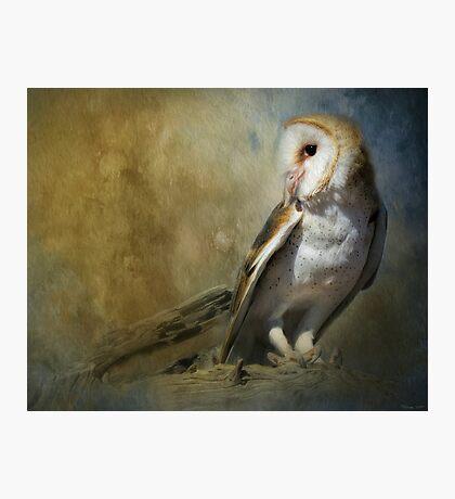 Bashful Barn Owl Photographic Print