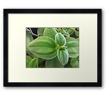 Velvety Greens Framed Print