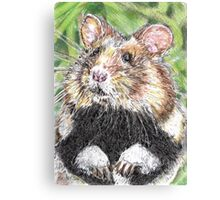 Did Someone Say Nuts Canvas Print