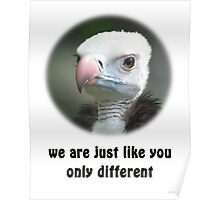 White-headed Vulture for Equal Rights Poster