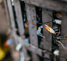 Crabs In A Bucket by thomasawilson