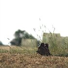 Turkey Vultures by JMcCombie