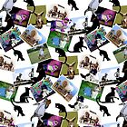 Collage of  Cat Photographs  by Gravityx9