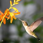 Female Ruby-Throated Hummingbird by JMcCombie
