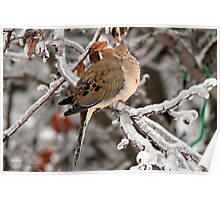 Mourning Dove in the Ice Storm Poster