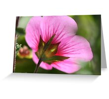 African Mallow Greeting Card