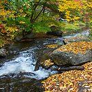 Pigeon Creek, Muskoka  by Nancy Barrett