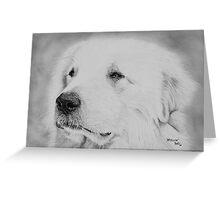 """Apollon"" - Pyrenean Mountain Dog (Great Pyrenees) Greeting Card"